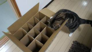 Download 入れない箱とねこ。-The box which Maru can't enter.- Video