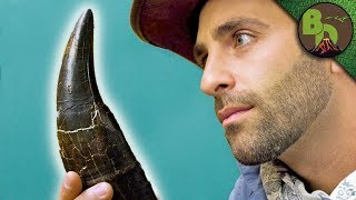 Download The MOST FAMOUS DINOSAUR Tooth! Video