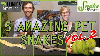 Download Snake Discovery and Clint's Reptiles - Five MORE of the Best Pet Snakes You Could Possibly Get! Video