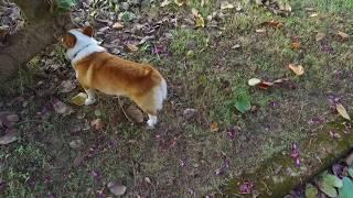 Download [[散步直播]#8 鄉下好天氣的悠閒午後 Video