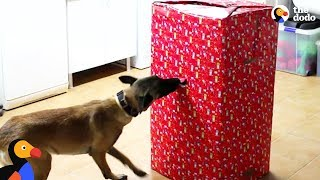 Download Dogs Open Best Christmas Present EVER | The Dodo Video