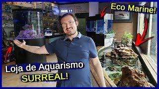 Download Visitei uma das maiores Lojas de AQUARISMO do Brasil! - Eco Marine Video