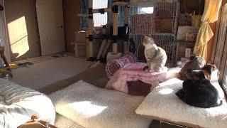 Download 冬の猫部屋。猫ハウスや猫用こたつの中は何度 Winter of Japan cat room temperature Video