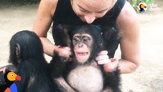 Download Woman Goes Undercover To Save Baby Chimp's Life | The Dodo Endangered Species Day Video