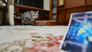 Download コマ送りじゃないよ?リズムにノッて小刻みに動く猫 Video