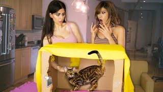 Download WHAT'S IN THE BOX CHALLENGE (EXOTIC ANIMALS) with Azzyland! Video
