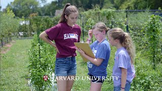 Download Harvard student Izzy Goodchild-Michelman grows connections Video