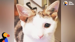 Download Cat With 4 Ears Loves Helping Foster Kittens - FRANKENKITTEN | The Dodo Video