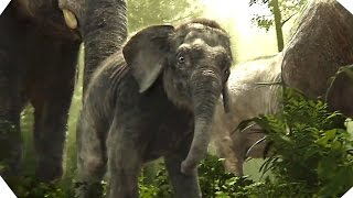 Download The Elephants - THE JUNGLE BOOK - Movie Clip # 6 Video