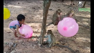 Download monkey fight to get ballon from little boys, monkey hit little boy cry, funny video monkey Video