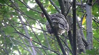 Download Owl Poop. Video