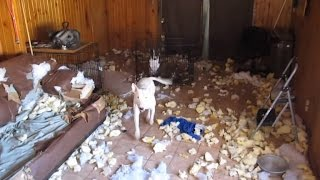Download When Owners Are Away, Pets Will Play: See What Happens When You're Gone Video