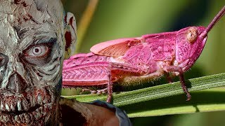 Download STRANGE Pink Creatures and Zombies Video