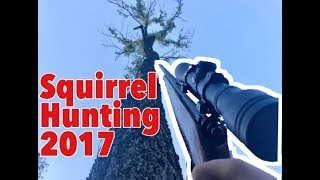 Download Squirrel Hunting With a 22lr Video