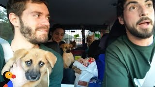 Download Rescue Dogs Go On EPIC Road Trip With Awesome Guys To Find Forever Homes | The Dodo Video