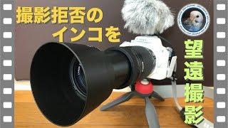 Download 撮影拒否を続けるインコのピピのおしゃべりを望遠レンズで撮影してみる / Canon EOS Kiss X7 & 250mm Zoom Lens & AT9941 MIC [#060] Video