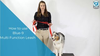 Download How to use the Multi-Function Training Leash by Blue-9 Video