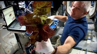 Download Space Station Live: How Does Your Garden Grow in Space? Video
