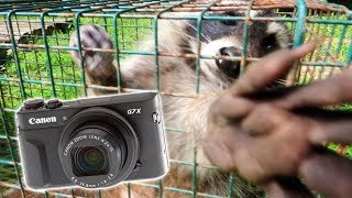 Download HE GRABBED MY CAMERA! (Raccoon Trapping) Video