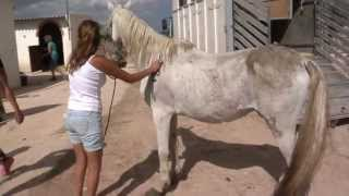 Download Horses saved from death The English version : https:///3CC-8OyJyT0 Video