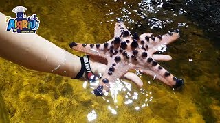 Download KETEMU REAL BABY SHARK | VLOG SERU BERMAIN KE MONSTER AQUARIUM CIMORY Video