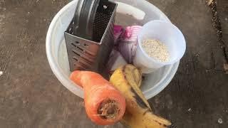 Download Alimentos diarios de los gallos que estan en cuido Video