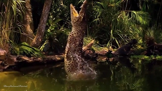 Download Amazing Animals Hidden Deep in the Jungle - Nature Documentary 2017 Video