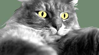 Download Cat Hug / SKETCH Video