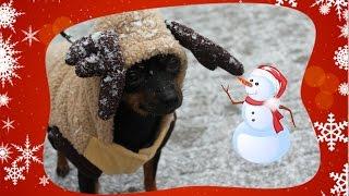 Download Vlogmas 2016 dzień 20 nowe dekoracje i pada śnieg spacer reniferka w śniegu Video
