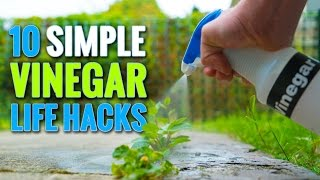Download 10 Simple Vinegar Life Hacks To Try At Home Video