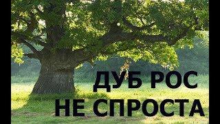 Download КОГДА ВЫКОПАЛ- БРОСИЛО В ЖАР!!! Video