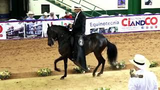 Download DULCE FANTASIA DE FLORENCIA, PASO FINO COLOMBIANO COPA ABURRA NORTE GRADO B 2019 Video