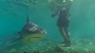 Download Swimming with Bull Sharks | CAUTION! | Smart Sharks | BBC Earth Video