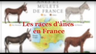 Download Les races d'ânes en France Video