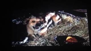 Download Old Yeller rabies scene Video