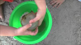 Download Kids Playing with Jellyfish on Tybee Island (HD) Video