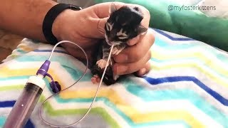 Download Rescue Newborn Kitten Who Was Frozen Solid Grows Up To Be Strong And Feisty Video