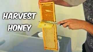 Download Harvest Honey - Part 1 Video