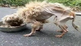Download Amazing Transformation Of Starving Dog After Rescued Dog Rescue Stories Video