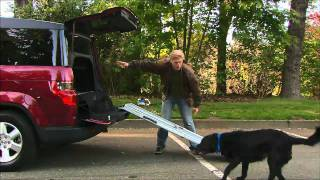 Download DRIVE- Dog Friendly Honda Element Video