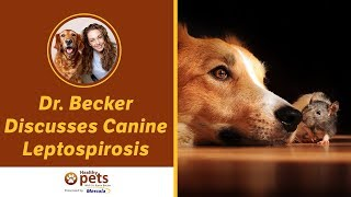 Download Dr. Becker Discusses Canine Leptospirosis Video