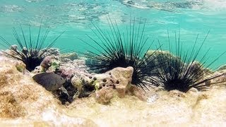 Download Mexico Coral Reef Undewater HD (GoPro) Video