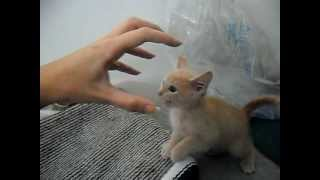 Download CUTE KITTEN! Funny,scared of the claw! Video