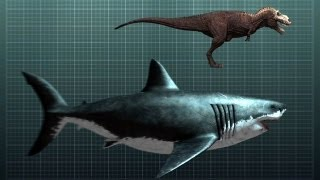 Download The Nightmarish Megalodon   Sharkzilla - Shark Week 2012 Video