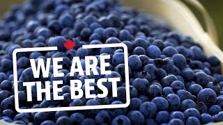 Download 80 million pounds of blueberries all from one farm | We Are The Best Video