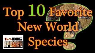 Download Top 10 Favorite New World Tarantulas Video