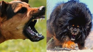 Download MOST DANGEROUS Dogs On Earth! Video