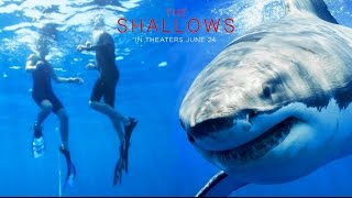 Download The Try Guys Swim With Sharks // Sponsored by The Shallows Video