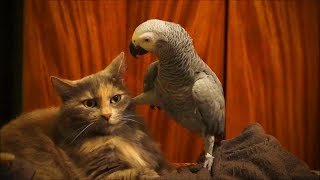 Download Funny Animals Doing Funny Things 2019 #2 Video