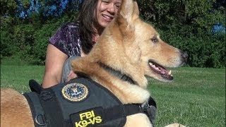 Download Meet Dolce, The FBI's First Therapy Dog Video